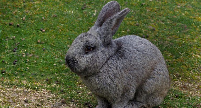 Nicht nur Eier und Hasen zu Ostern