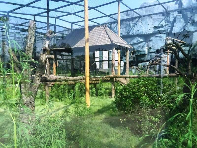 webPavianaussenanlage im Tangshan Zoo_Foto_Tanghan Zoo