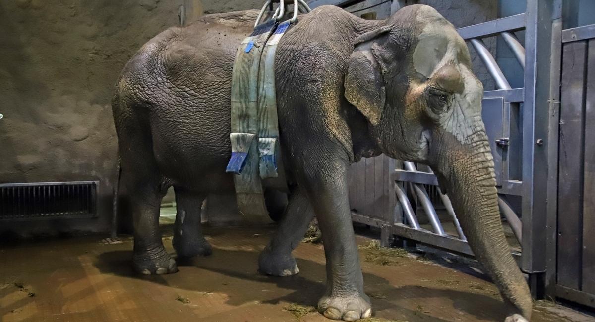 Erfolgreiche Elefantenrettung