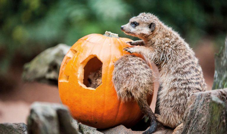 Halloweentage in der Zoofalknerei im Neunkircher Zoo