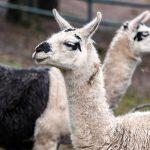 Landpartie im Neunkircher Zoo