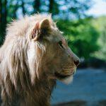 Informationen zu Ihrem Zoobesuch unter besonderen Bedingungen