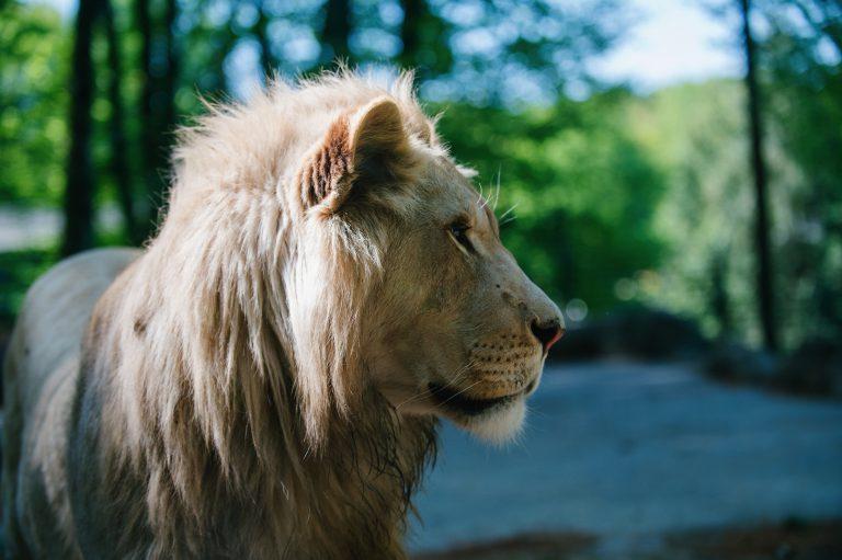 Zoobesuch unter besonderen Bedingungen