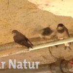 Saar Natur zu Besuch im Neunkircher Zoo