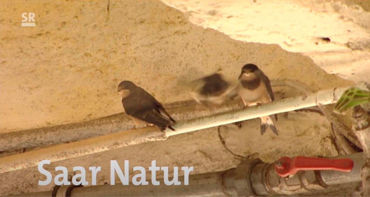 You are currently viewing Saar Natur zu Besuch im Neunkircher Zoo