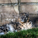 Zoos sind sichere Ausflugsziele