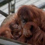 Willkommen im Affenkindergarten
