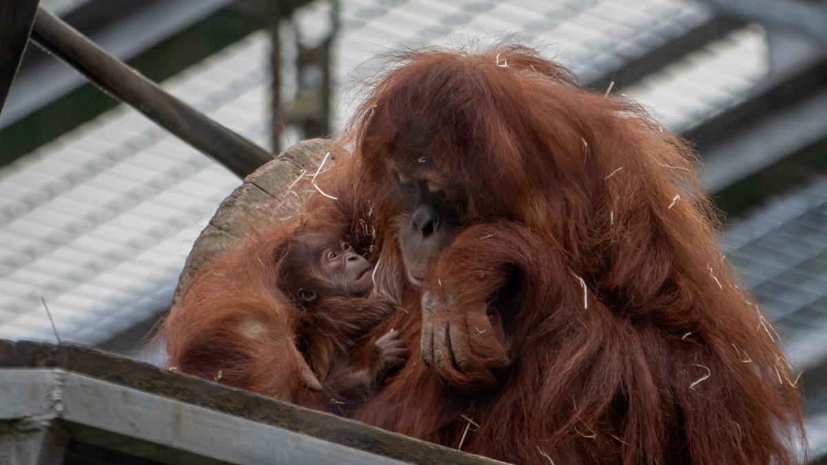 You are currently viewing Willkommen im Affenkindergarten